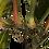 Thumbnail: Planta Hoja Elegante 155cm de alto