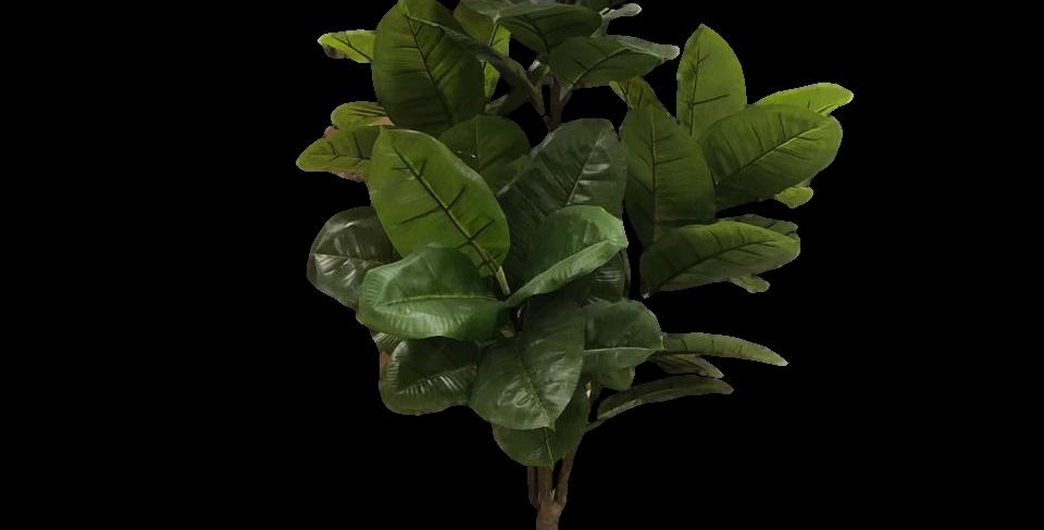 Planta Caucho 160cm altura