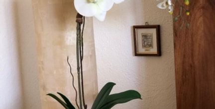 Orquideas en cilindro platinado