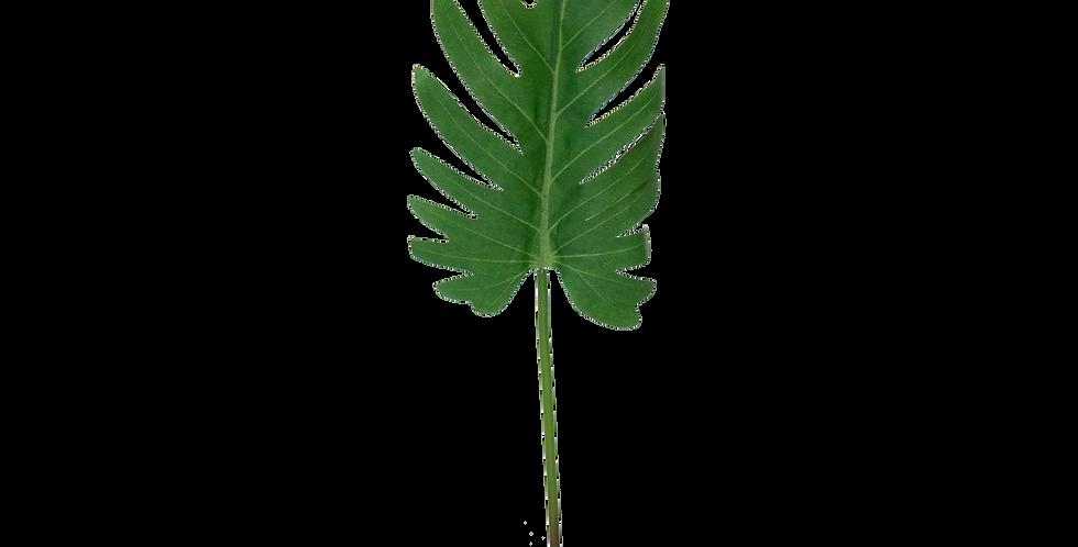 Hoja de Philodendro 40cm