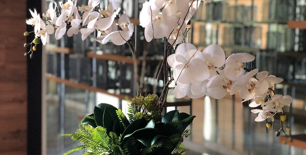 Triada de orquídeas en cubo metálico