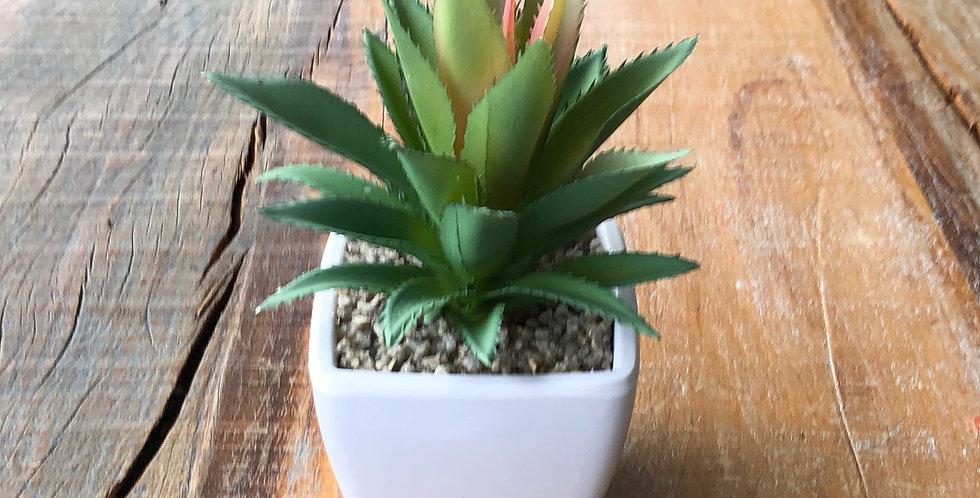 Aloe rosa