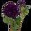 Thumbnail: Dahlia Lipoma 50cm