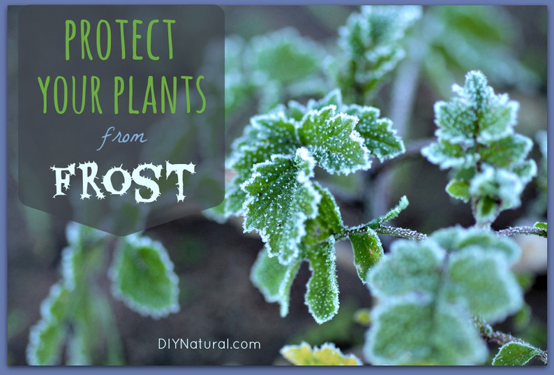 How-To-Protect-From-Frost.jpg