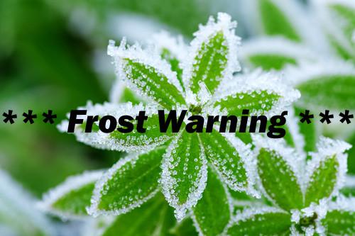 Frosted_Leaf_.jpg