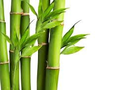 Why Use Bamboo Products?