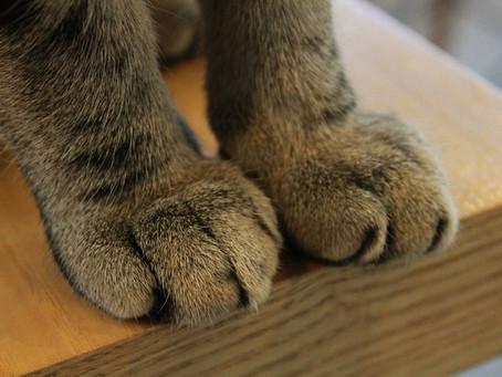 Нью-Йорк - первый штат США, в котором запрещено удаление когтей у кошек