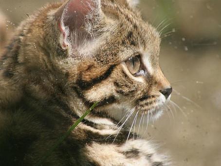 Самая милая и маленькая кошка на Земле - безжалостная машина для убийств