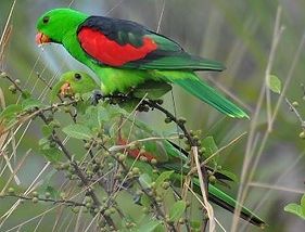 b45ac0b37e3f41e5d769ea99af539812--parrot