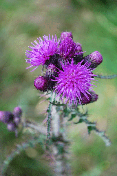 Flower in Ireland