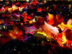 universal+leaves
