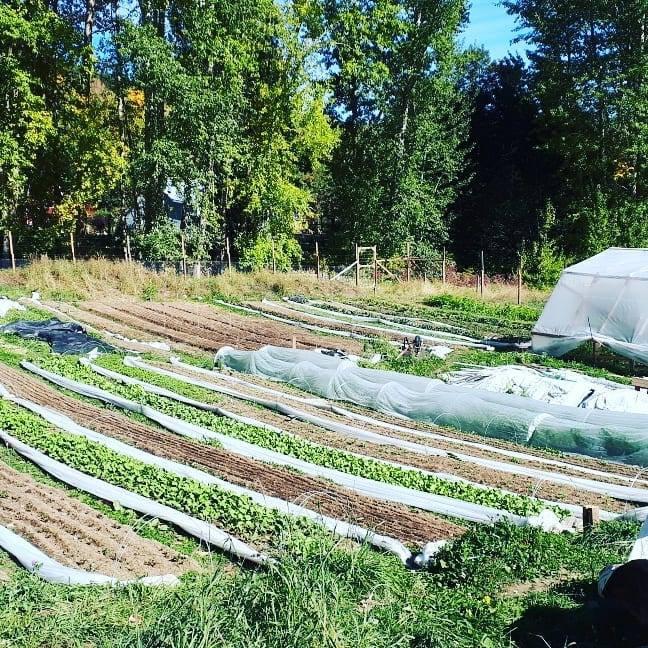 Happy Hills Farm gardens