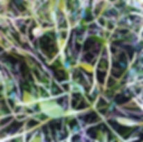 farm micros.jpg