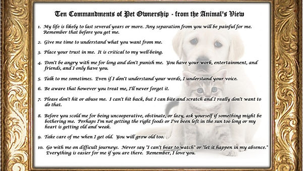 Ten Commandments for Pets_edited.jpg