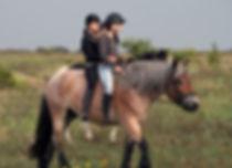 pferdekinder[1].jpg