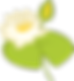 water-lily-4177686__340[1].png