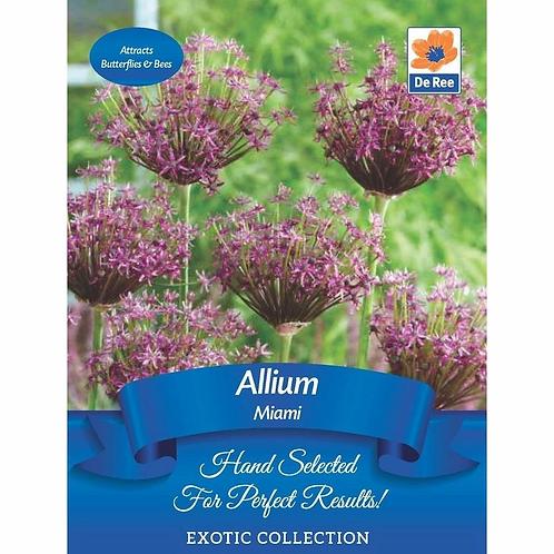 Allium Miami Bulbs (De Ree)