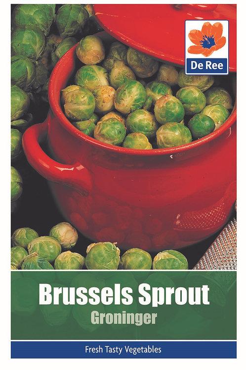 Brussels Sprout Groninger (De Ree Seeds)