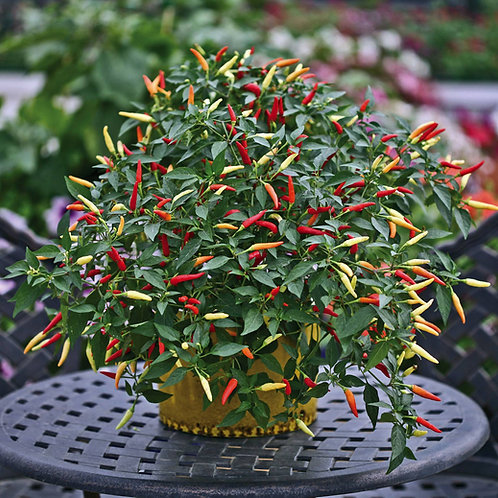 Unwins Pepper (Chilli) Basket Of Fire F1 - Approx 6 Seeds