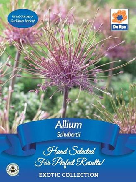 Allium Schubertii Bulbs (De Ree)