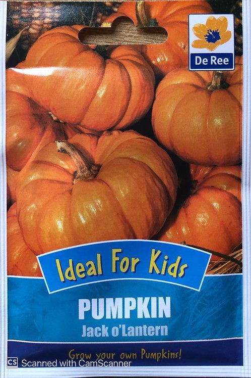 Pumpkin Jack O'Lantern (De Ree Seeds)