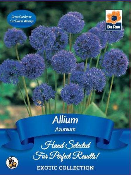 Allium Azureum Bulbs (De Ree)