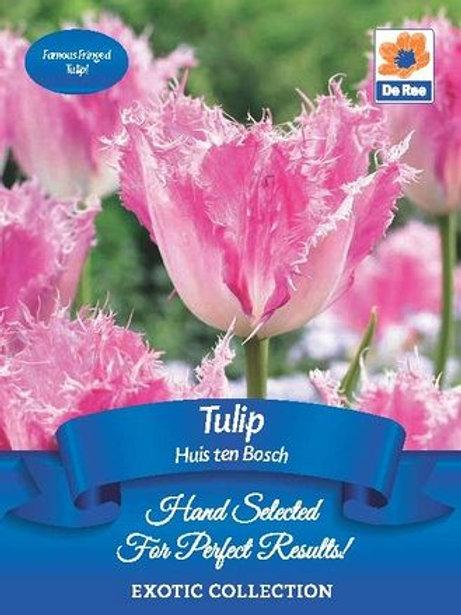 Tulip Huis Ten Bosch (De Ree)