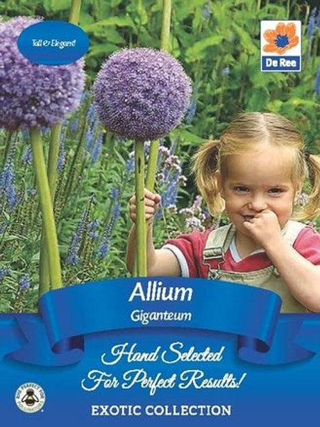 Allium Giganteum (De Ree)