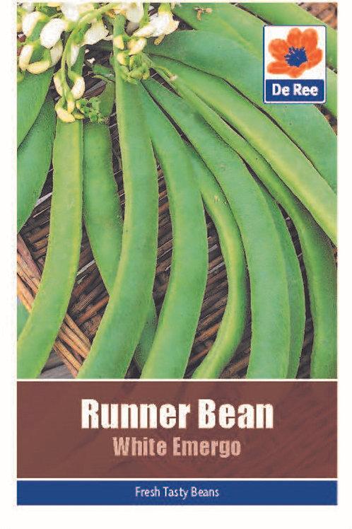 Runner Bean White Emergo (De Ree Seeds)
