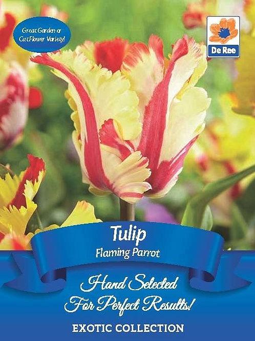 Tulip Flaming Parrot (De Ree)