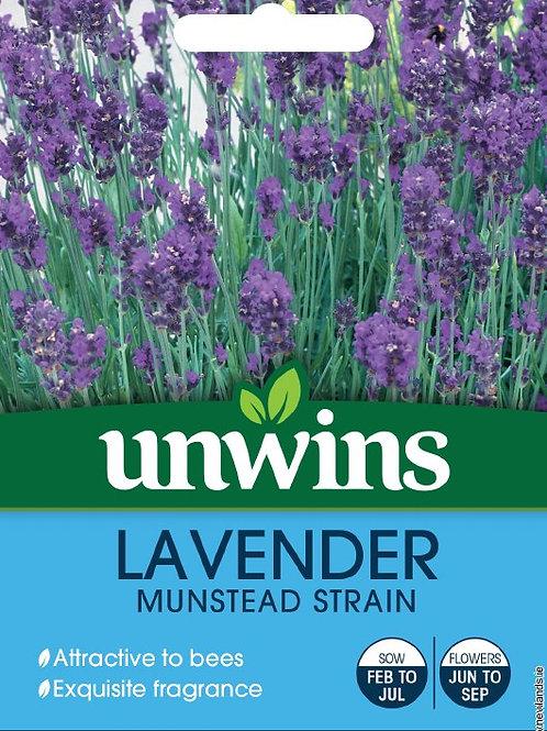 Unwins Lavender Munstead Strain