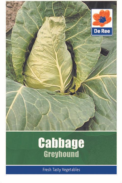 Cabbage Greyhound (De Ree Seeds)