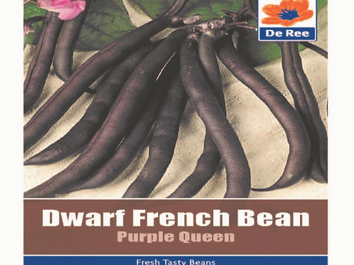 Dwarf French Bean Purple Queen (De Ree Seeds)