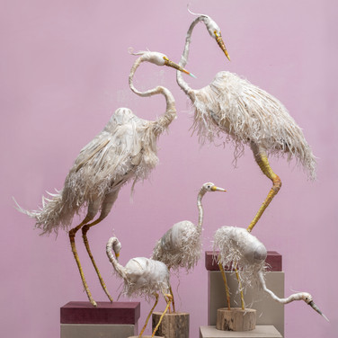 Great White Herons and Egrets