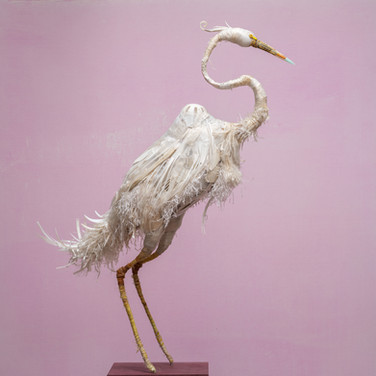 """Josphine"" Great White Heron"