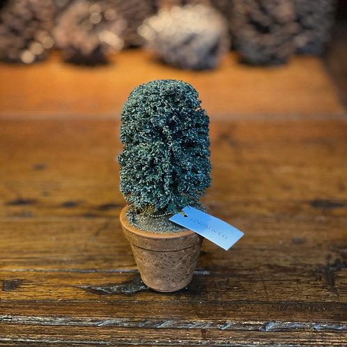 Mini-Vaso Arbusto