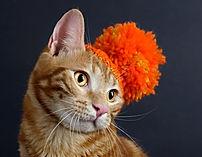 produits de soins naturels pour chat, antirparasitaires, aromathérapie, shampoings, pet head, naturly's, régul mal du transport