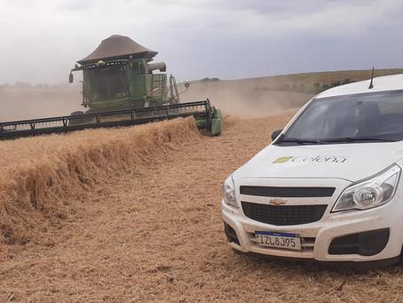 Colheitas de trigo – Rio Grande do Sul
