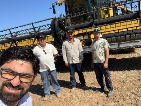 Start nas colheitas de canola no Cerrado