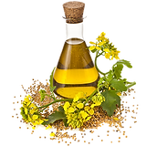 kisspng-canola-cooking-oils-rapeseed-see