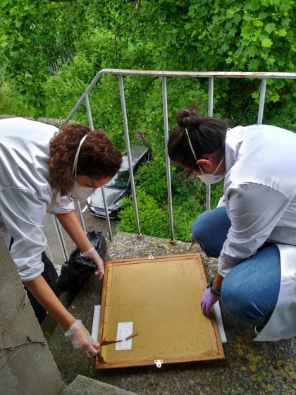 Conservation Framing - During