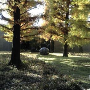 日本の木材の蓄積量は江戸時代以降最強に充実しているらしい