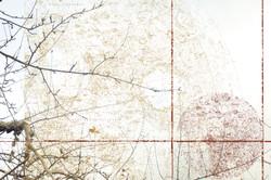 Globe oculaire -1- (détail)