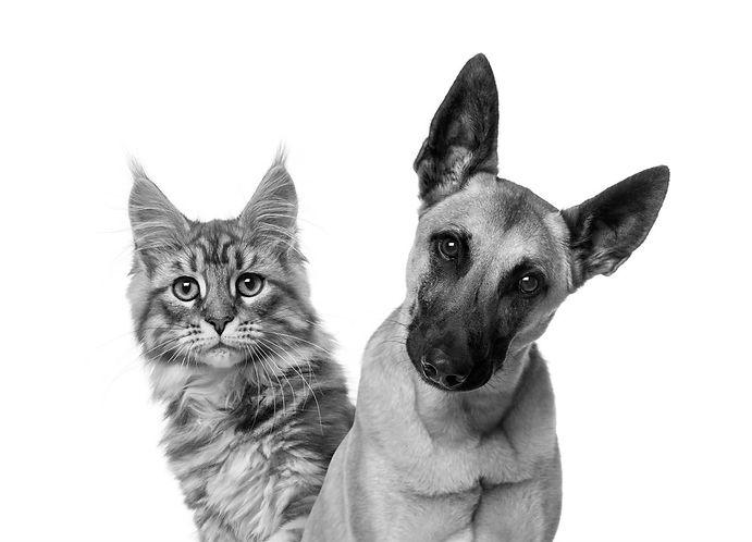 cat-dog_edited.jpg