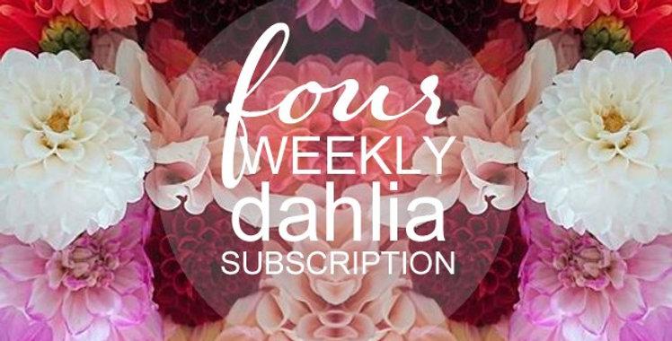 4 weekly Dahlia Subscription