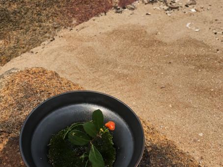 一對一禪花與茶戶外版 Outdoor one on one zenhana with tea