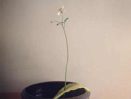 譚姑娘的瓦砵 Miss Tam's porcelain bowl