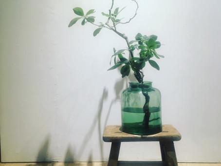 大型挵花  Large flower arrangement
