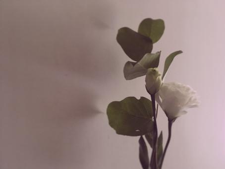 花顏 The nature of flower