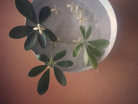 一花一葉 One flower one leaf